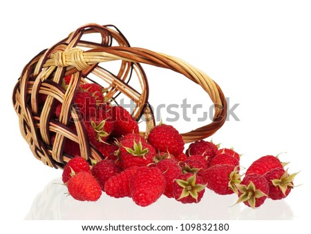 Ripe raspberries scattered from wicker basket on white background