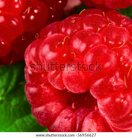 Ripe raspberry with green leaf extreme closeup