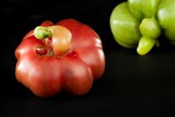 Ripe tomato of unique, strange shape. Purple calabash tomato heirloom. Eco vegetables.