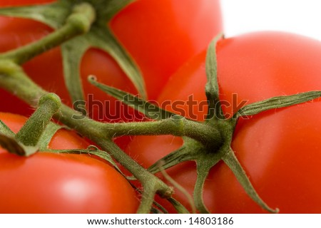 ripe tomatoes isolated