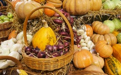 Ripe vegetables. Red onions in a wicker basket. Colorful pumpkins, garlic,  cabbages, apples and hay. Harvest market. Pumpkins of different varieties and sizes. Thanksgiving day. Crop. Autumn concept.