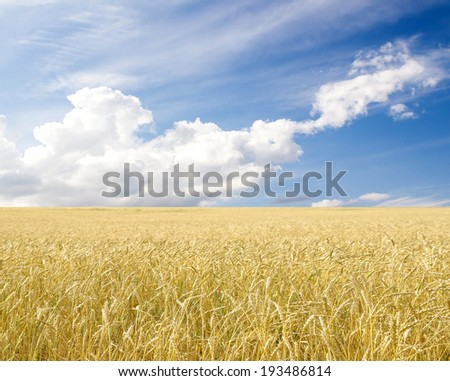 Ripe wheat ears against blue sky with clouds #193486814