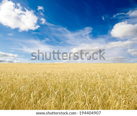 Ripe wheat ears against blue sky with clouds #194404907