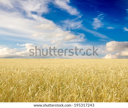 Ripe wheat ears against blue sky with clouds #195317243