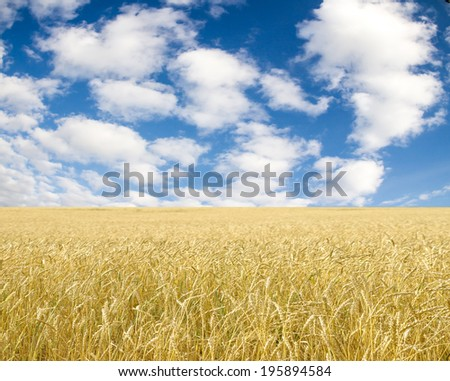 Ripe wheat ears against blue sky with clouds #195894584