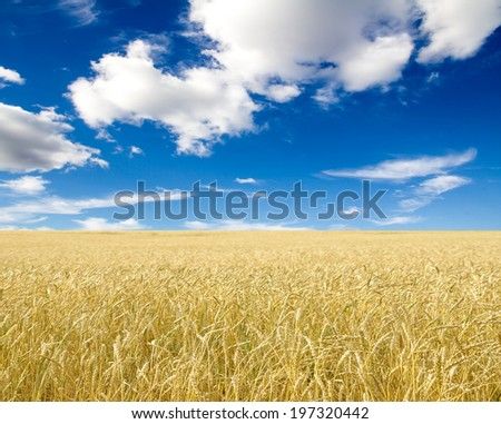 Ripe wheat ears against blue sky with clouds #197320442