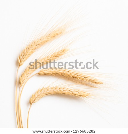 Ripe wheat on white background close-up #1296685282