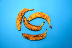 Ripe yellow bananas, bunch of ripe bananas with dark spots on blue background. Overly ripe bananas with browning skin.