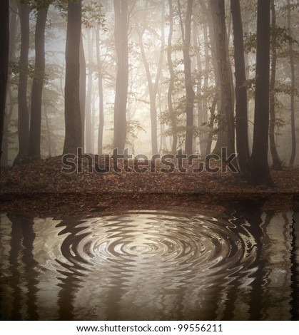 ripple in a forest lake