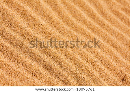 Ripple patterns blown by the wind on the beach sand