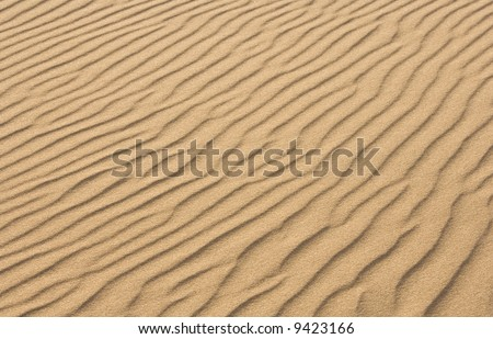Rippled pattern seen in windswept sand.