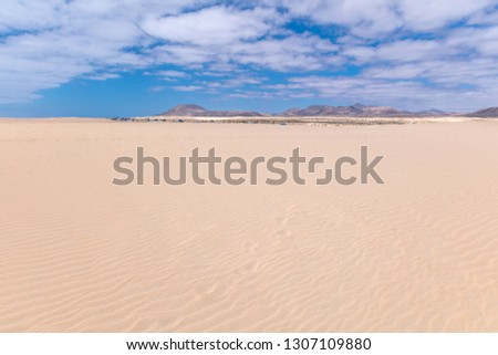 Ripples on sand dune near Corralejo with volcano mountains in the background, Fuerteventura, Canary Islands, Spain #1307109880
