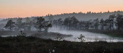 Rising fog on a colorful and calm evening in a swamp of Kemeri National Park in Latvia