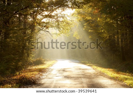 Rising sun falls on the road leading through the autumn woods.