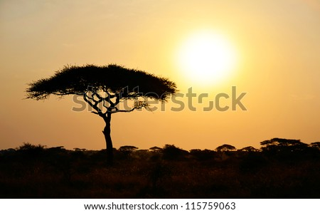 Rising Sun shinning with single Acacia tree in Africa. Beautiful scenery of sunrise / sunset in Serengeti National Park