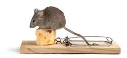 Risk, Mousetrap, Mouse.