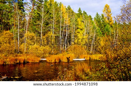 River and trees in the autumn forest. Autumn forest river view. Forest river in autumn