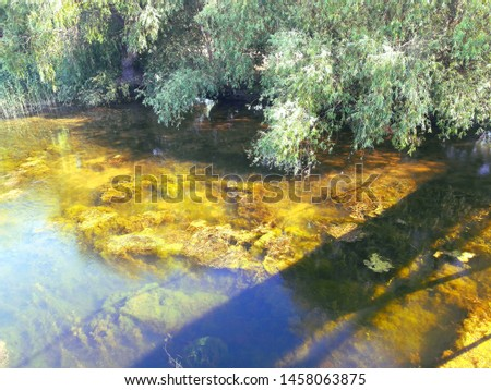 River bank. In clear water, a large amount of algae grows. Willow grows on the shore #1458063875