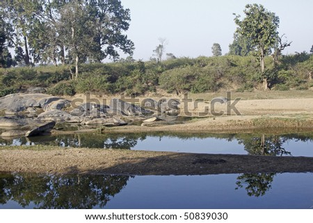 River bed on the verge of drying out in Kanha national park, India