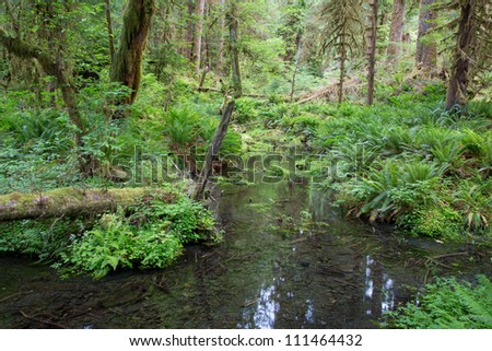 River beween trees in largest rain forest in the western hemisphere, in Olympic National Park, Washington, USA