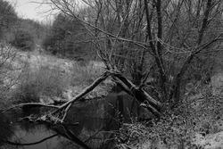 river blackandwhite winter tree nature