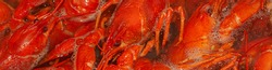 River crayfish are boiled in boiling water. Red freshly boiled crayfish. Narrow banner. Close-up, selective focus.