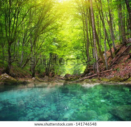 Shutterstock River deep in mountain forest. Nature composition.