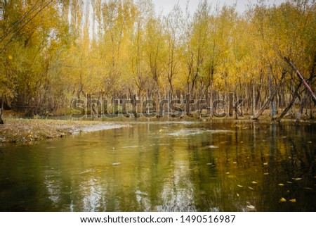 River gently flow through yellow foliage forest with reflection in the water. Landscape serene scenery in autumn season, Skardu. Gilgit Baltistan, Pakistan. #1490516987
