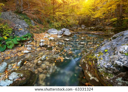 River in autumn forest. Nature composition.
