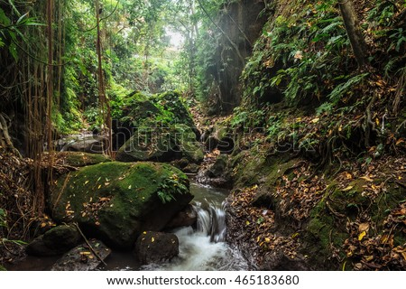 River in stones of tropical jungle nature at the Sacred Monkey Forest Sanctuary, Ubud region. Jungle nature of Bali island. Nature beauty of tropical forest. Natural rainforest landscape of Indonesia