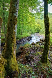 river in the beech forest. summer nature scenery on a sunny day. rapid water flows among the rocks. trees on the shore in lush green foliage