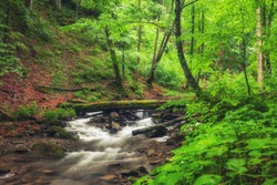 River in the forest. Green summer woodland and creek