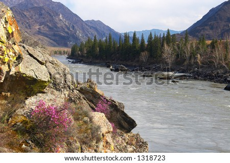 River in the mountains. Russia, Altay.