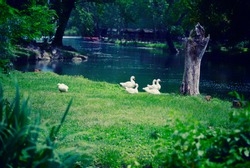River in the park of Grassano with ducks