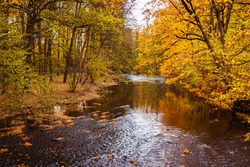 river in the park on an autumn day, the waters look brownish yellow, the reflection of autumn colors in the water