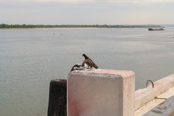 River landscape, dove on the dock, water in the river, shore and ship on the horizon.