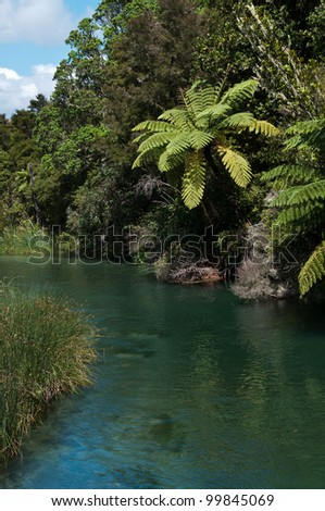 River outlet from lake Tarawera in New Zealand where trout swim up river to spawn with native bush and plants on river bank