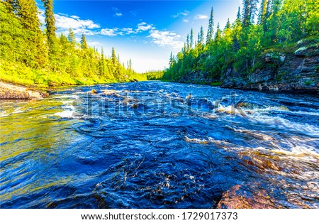 River rapids at summer. Creek stream flowing through trees background