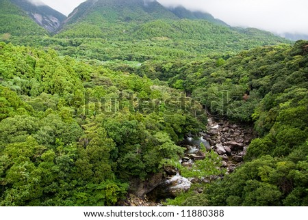 River running through the lush forest