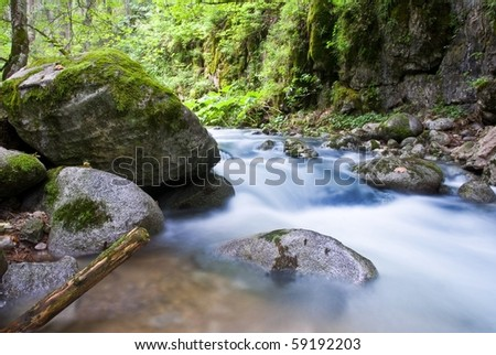 river rushing in a forest