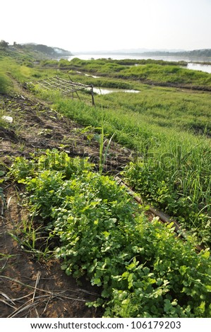 River Thailand Outdoor Vegetable Farm Field