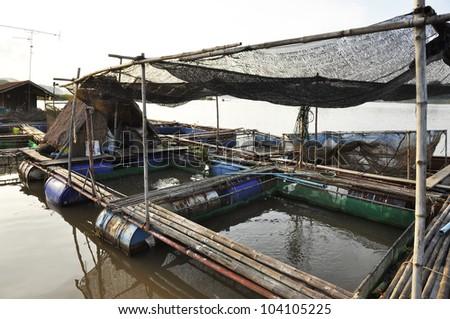 River Thailand Raft Bamboo Farm Fish