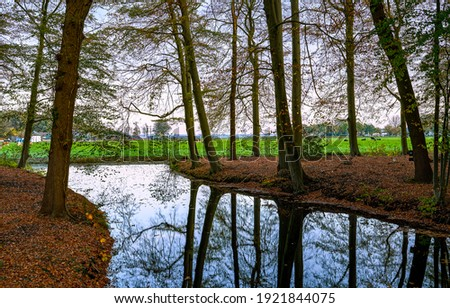 River tree branches reflection in water. River trees reflection in water. Forest trees reflection in river water. Forest river trees reflection in water