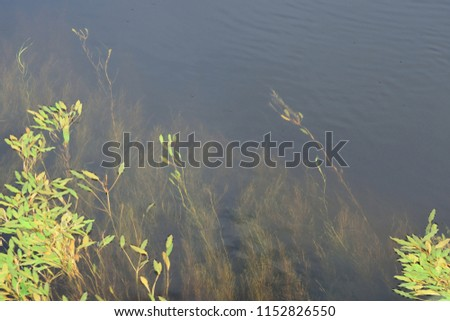 River Vegetation Abstract #1152826550