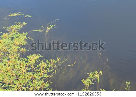 River Vegetation Abstract #1152826553