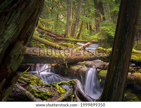 River waterfall in a mossy forest. Forest stream. River stream in mossy forest. Mossy forest stream Сток-фото ©