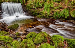 River waterfall in mossy forest. Stream in mossy forest. Cold creek with mossy rocks. Stream water green moss
