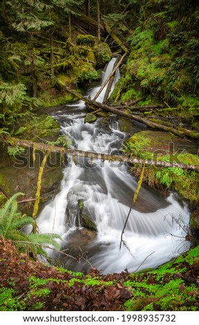 River waterfall in the forest. River stream in forest. Forest stream view. River stream