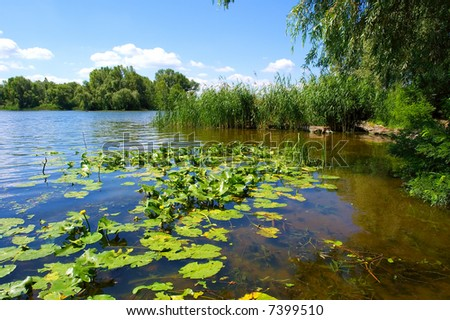 River with water-lilies in hot summer day. Shot in Ukraine.