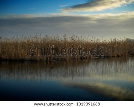 river with water reeds #1019391688